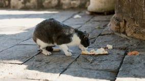 Pet o assento na terra, comendo a comida de gato fora no parque Vaquinha doméstica que come o alimento no assoalho filme