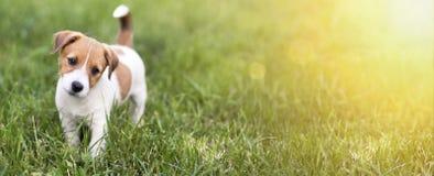 Pet o conceito do treinamento - bandeira feliz bonito do cão de cachorrinho fotografia de stock royalty free