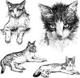 Pet o gato Imagem de Stock