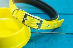 Pet os colares e as bacias de amarelo no fundo de madeira Foto de Stock Royalty Free