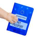 Pet passport. Dog or pet holding its pet passport with paw , isolated on white background Royalty Free Stock Photography
