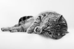 Pet Photo. On an  background Royalty Free Stock Image