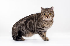 Pet Photo Royalty Free Stock Image