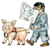 Pet Pig walking. Walking Pet Pig and reading newspaper asian man Royalty Free Stock Images