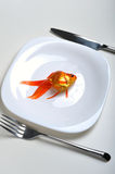 Pet in plate. Goldfish in a plate fork and knife Stock Photos