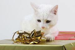 Pet playing with ribbon. Funny white kitty cat having fun with presents Royalty Free Stock Images
