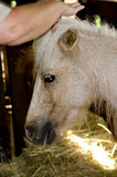 Pet pony Stock Image