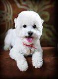 Pet portrait Stock Images