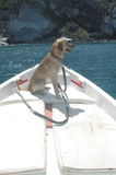 Pet on the prow of a boat Stock Image