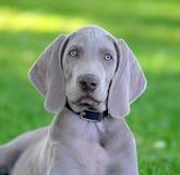 Pet Stock Photo