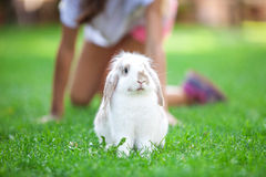 Pet rabbit on grass in park Royalty Free Stock Photography
