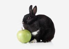 Pet. Rabbit isolated on white background Royalty Free Stock Photography