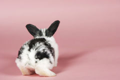 Pet Rabbit On Pink Background Stock Photos