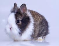 Pet rabbit Stock Photos