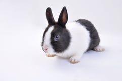 Pet rabbit Stock Photography