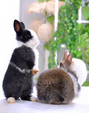 Pet rabbits Royalty Free Stock Photos