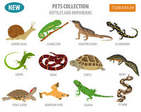 Pet reptiles and amphibians icon set flat style isolated on whit Royalty Free Stock Image