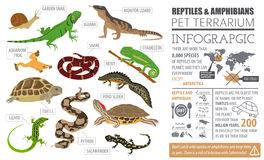 Pet reptiles and amphibians icon set flat style  on whit. E. House keeping this animals collection. Create own infographic about pets. Vector illustration Stock Photo