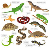 Pet reptiles and amphibians icon set flat style  on whit Royalty Free Stock Photography