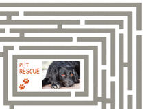 Pet rescue maze - help us find more homes for abandoned pets. Stock Photography