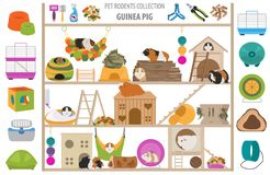 Pet rodents home accessories icon set flat style isolated on white. Healthcare collection. Create own infographic about guinea pig stock photo