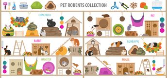 Pet rodents home accessories icon set flat style isolated on white. Healthcare collection. Create own infographic about guinea pig. Pet rodents home accessories vector illustration