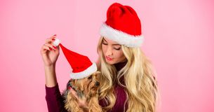 Pet safety during christmas. Woman and yorkshire terrier wear santa hat. Girl attractive blonde hold dog pet pink. Background. Celebrate christmas with pets stock photos