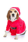 Pet santa christmas holiday gift Royalty Free Stock Image
