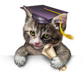 Pet School. Concept with a cute happy kitten wearing a graduation cap and holding a diploma as a symbol of animal training and veterinary education on a white Royalty Free Stock Photography