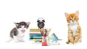 Pet and school stationery Royalty Free Stock Images