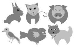 Pet Stock Photos