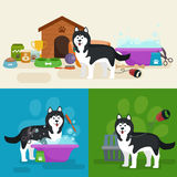 Pet shop, dog goods and supplies, store products for care Royalty Free Stock Images