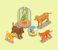 Pet Shop Isometric Background Royalty Free Stock Photo