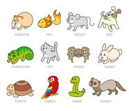 Pet shop, set types of pets. Cartoon illustrations animals. Logo, pictogram, infographic elements Stock Images
