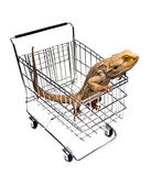 Pet Shopping Stock Photography
