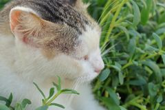 CAT RELAXING IN A GARDEN royalty free stock image
