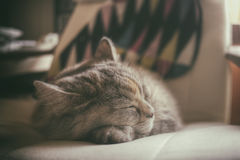 Pet. Sleeping hour. Royalty Free Stock Photography