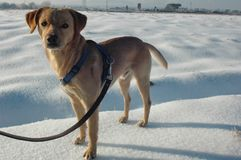 Pet on the snow. View of a pet on the snow royalty free stock images