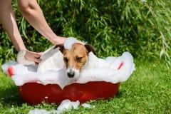 Pet spa zorg: de hond neemt een bad bij hete de zomerdag stock afbeeldingen