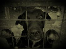 Sad dog in cage Stock Photography