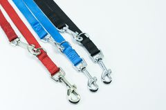 Pet supplies about leash for pet on white background. Silver hoo Stock Image