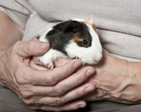 Pet therapy royalty free stock image