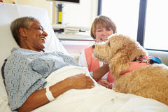 Pet Therapy Dog Visiting Senior Female Patient In Hospital. Pet Therapy Dog And Volunteer Visiting Happy Senior Female Patient In Hospital Royalty Free Stock Photos