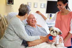 Pet Therapy Dog Visiting Senior Male Patient In Hospital. Smiling At Wife With Volunteer Standing By Bed Royalty Free Stock Photography