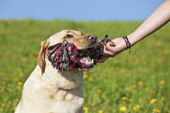 Pet toy Stock Photography