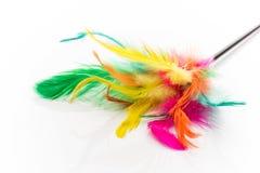 Pet toy. Royalty Free Stock Image