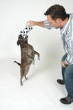 Pet Training Stock Photo