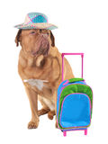 Pet travel concept Stock Images