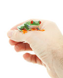 Pet Tree Frog Stock Photo