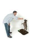 Pet Tricks Royalty Free Stock Image